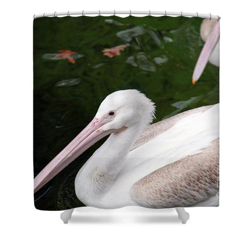 Pelican Shower Curtain featuring the photograph Pelican by Amanda Barcon