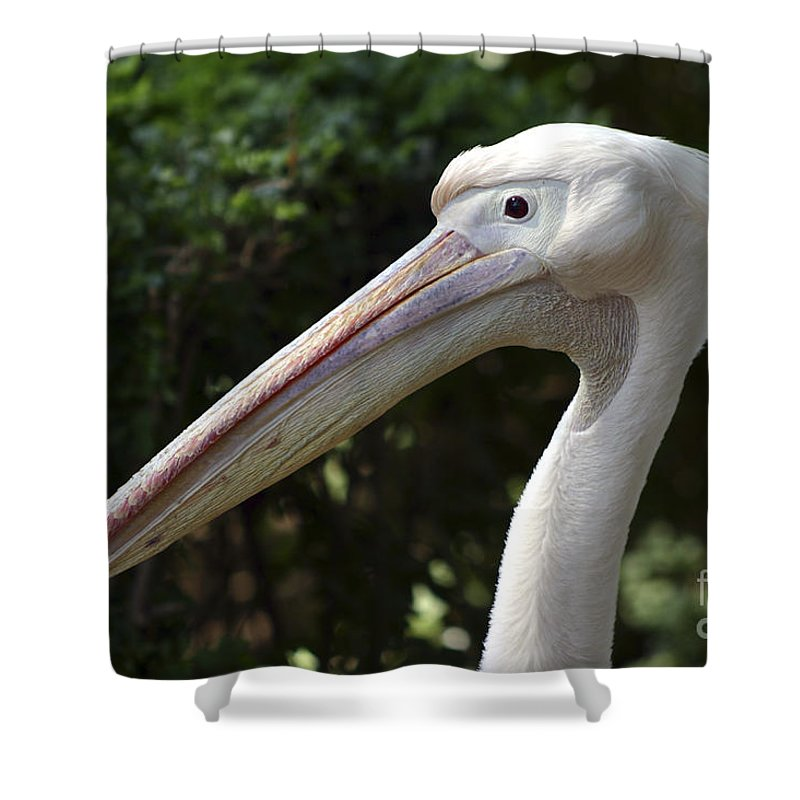 Close Up Shower Curtain featuring the photograph Pelican by Danny Yanai