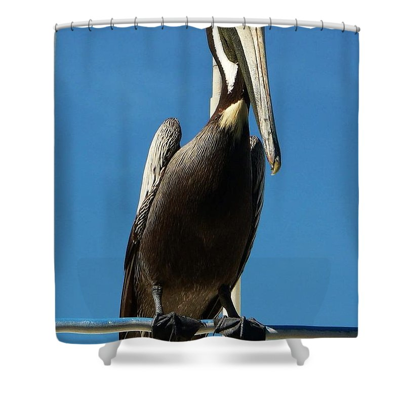 Pelican Shower Curtain featuring the photograph Pelican Dreams by Melissa Haney