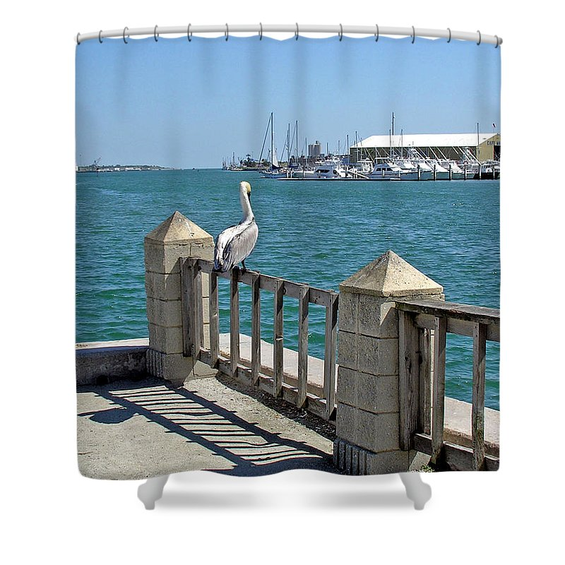 Port; Canaveral; Pelican; Gaze; Florida; Wildlife; Florida; Harbor; Atlantic; Ocean; Sea; Bird; Wate Shower Curtain featuring the photograph Pelican Gazing At Port Canaveral In Florida by Allan Hughes