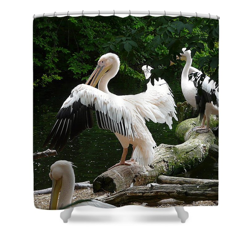 Bird Shower Curtain featuring the photograph Pelican Hideaway by Valerie Ornstein