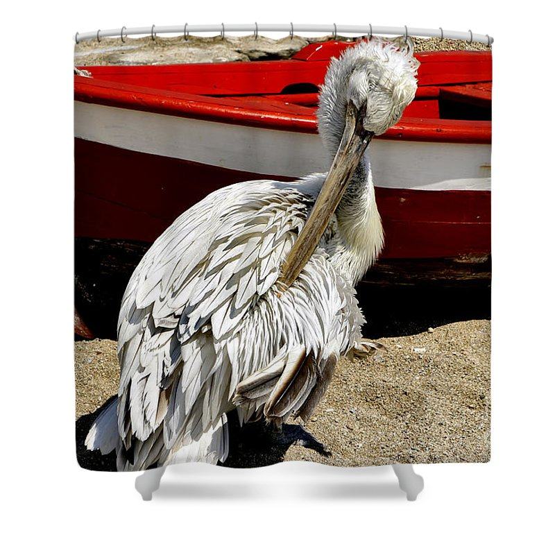 Pelican Shower Curtain featuring the photograph Pelican In Mykonos II by Madeline Ellis
