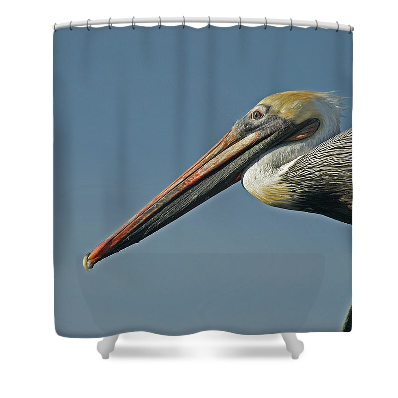 Animals Shower Curtain featuring the photograph Pelican Upclose by Ernie Echols