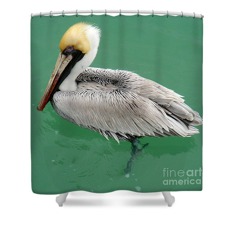 Florida Shower Curtain featuring the photograph Pelican's Cove by Chris Andruskiewicz