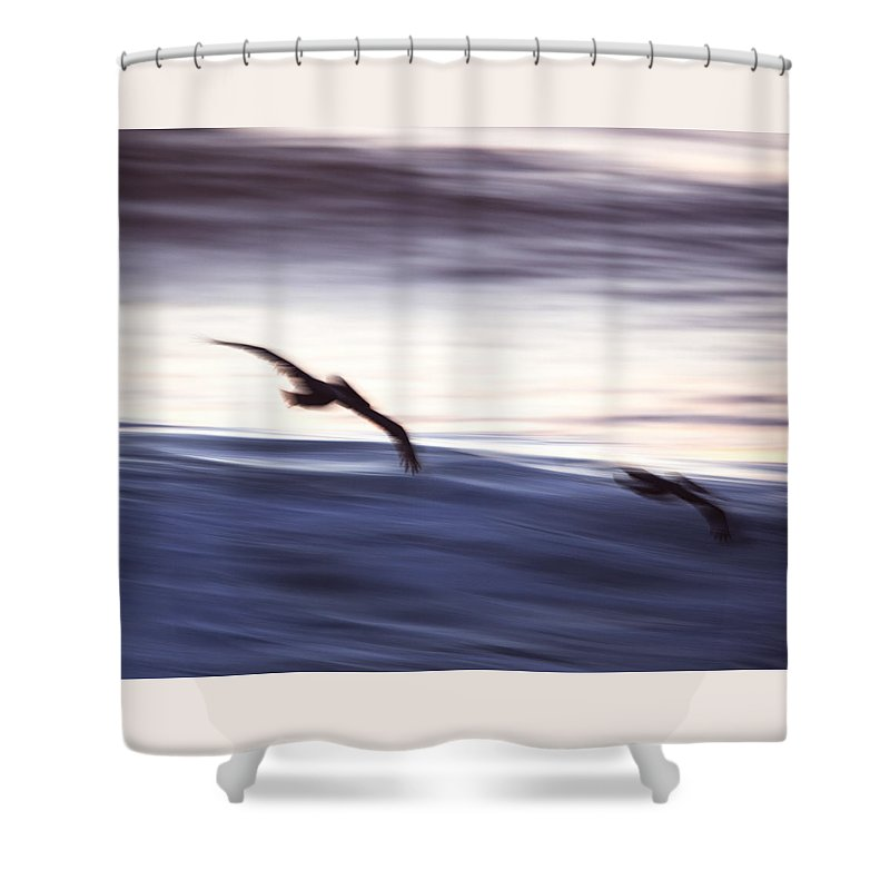 Sea Shower Curtain featuring the photograph Pelicans Ocean Flight In La Jolla by Michael Sangiolo