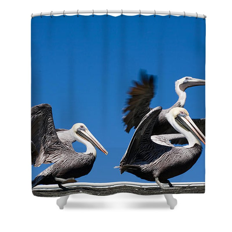 Pelicans Shower Curtain featuring the photograph Pelicans Take Flight by Mal Bray