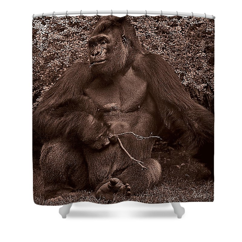 Gorilla Shower Curtain featuring the photograph Pensive by Chris Lord