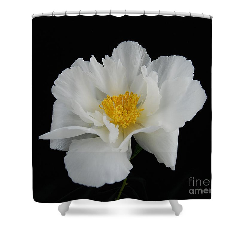 Peonies Shower Curtain featuring the photograph peony 10 Single White Peony II by Terri Winkler