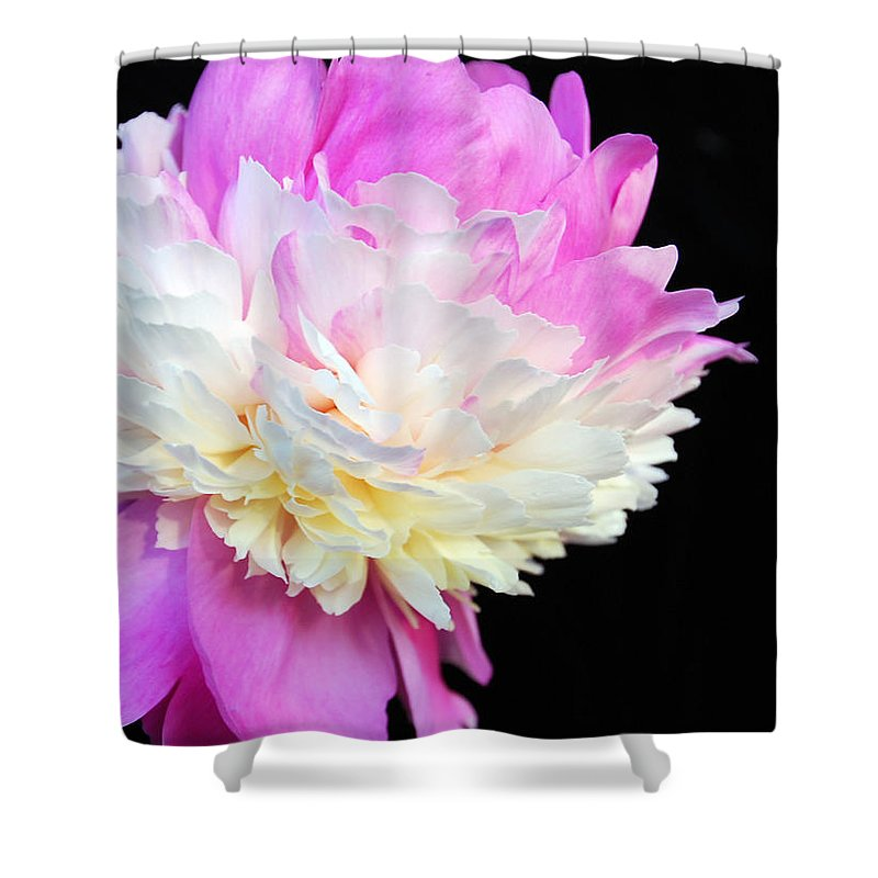 Peonies Shower Curtain featuring the photograph peony 16 Double Pink Peony Macro by Terri Winkler