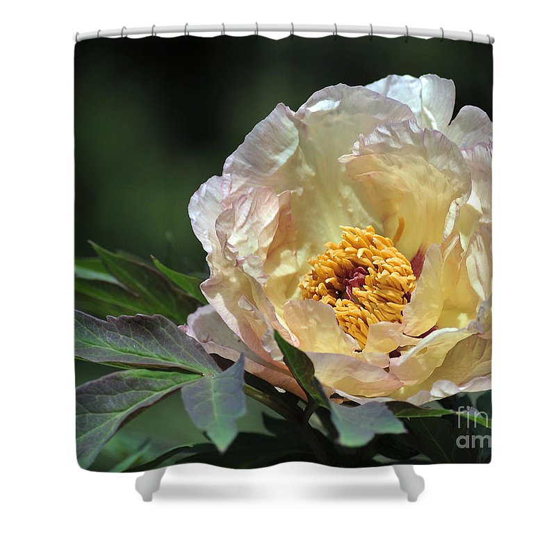 Peonies Shower Curtain featuring the photograph Peony 18 by Terri Winkler
