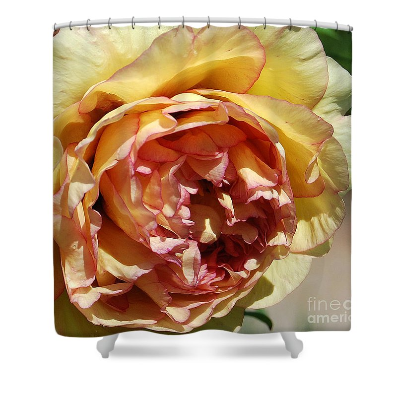 Peonies Shower Curtain featuring the photograph peony 19 Pale Yellow and Pink Tree Peony macro by Terri Winkler