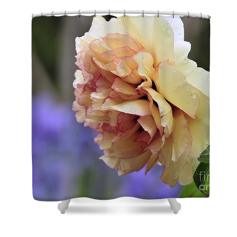Peonies Shower Curtain featuring the photograph Peony 24 by Terri Winkler