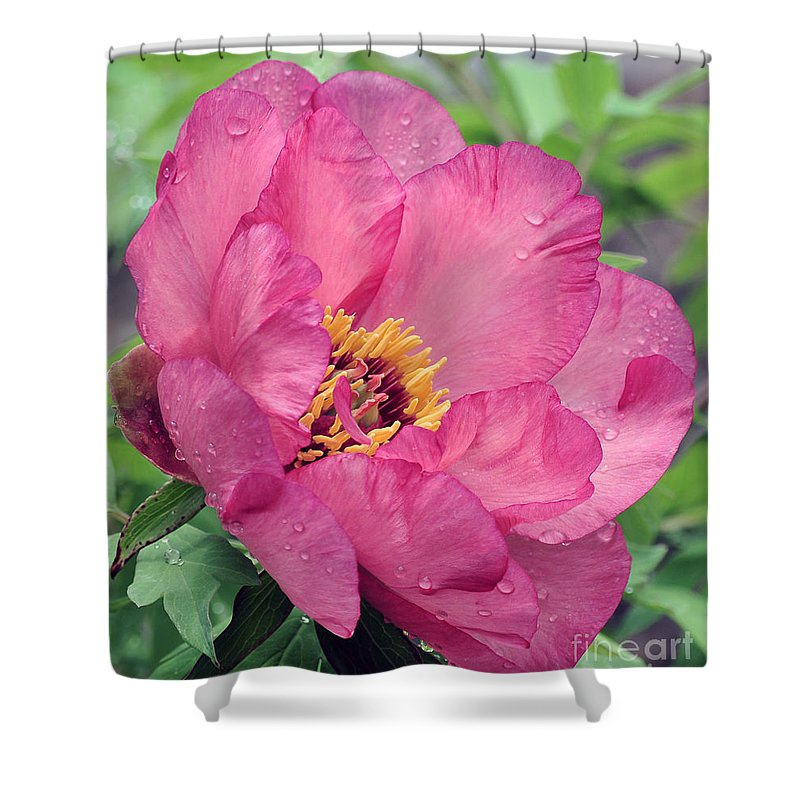 Peonies Shower Curtain featuring the photograph Peony 28 by Terri Winkler