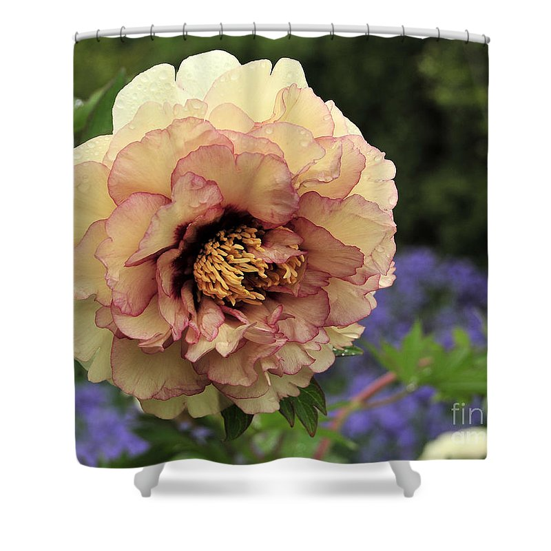 Peonies Shower Curtain featuring the photograph Peony 29 by Terri Winkler
