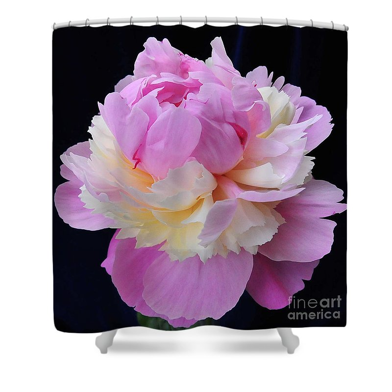 Peonies Shower Curtain featuring the photograph peony 4 Double Light Pink Peony II by Terri Winkler