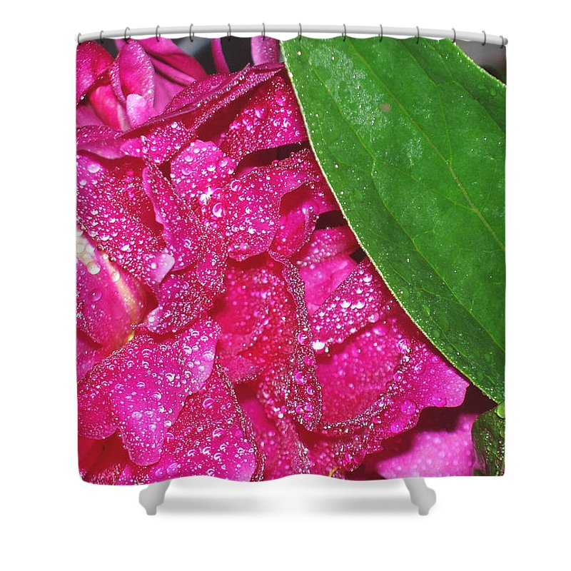 Peony Shower Curtain featuring the photograph Peony And Leaf by Nancy Mueller