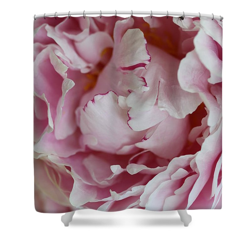 Peony Shower Curtain featuring the photograph Peony Close Up by Christiane Schulze Art And Photography