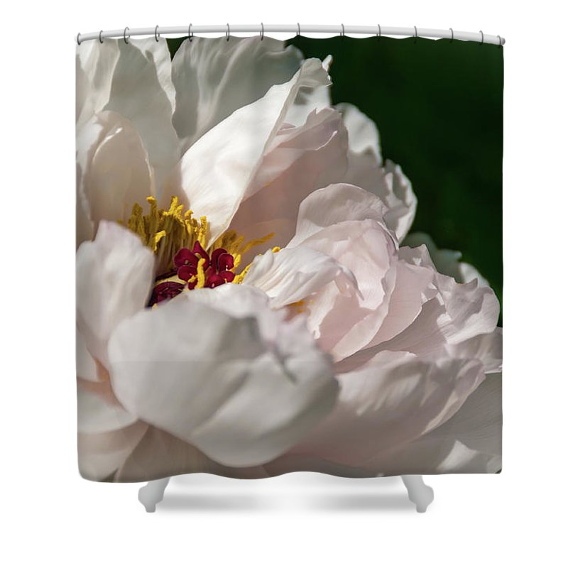 Peony Shower Curtain featuring the photograph Peony Petals by Amy Dooley