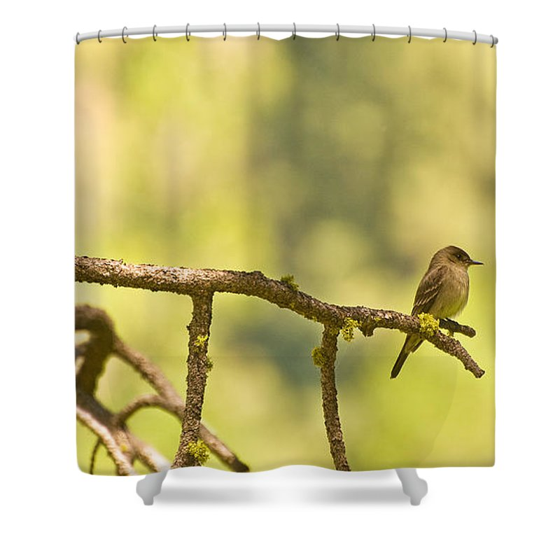 Bird Shower Curtain featuring the photograph Perched by Mick Burkey