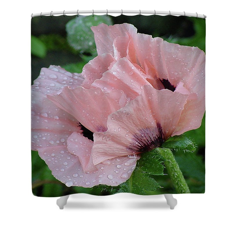 Flower Shower Curtain featuring the photograph Perfect Peach Poppy by Shirley Heyn
