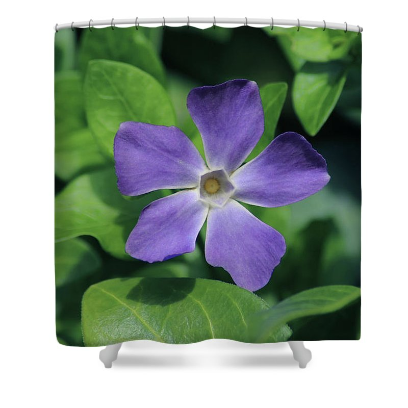 Purple Periwinkle Shower Curtain featuring the photograph Perfect Purple Periwinkle by Richard Stephen