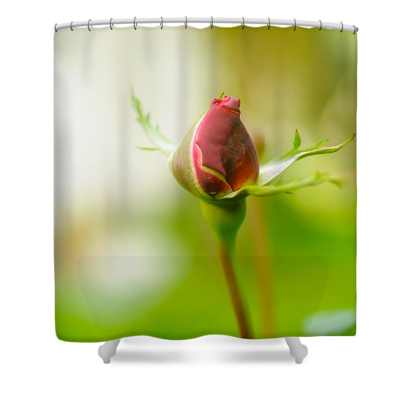 Perfect Shower Curtain featuring the photograph Perfect Red Rose Bud by Humorous Quotes
