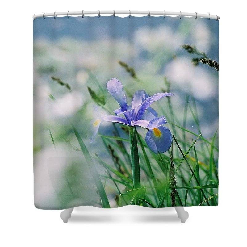 Periwinkle Shower Curtain featuring the photograph Periwinkle Iris by Nadine Rippelmeyer