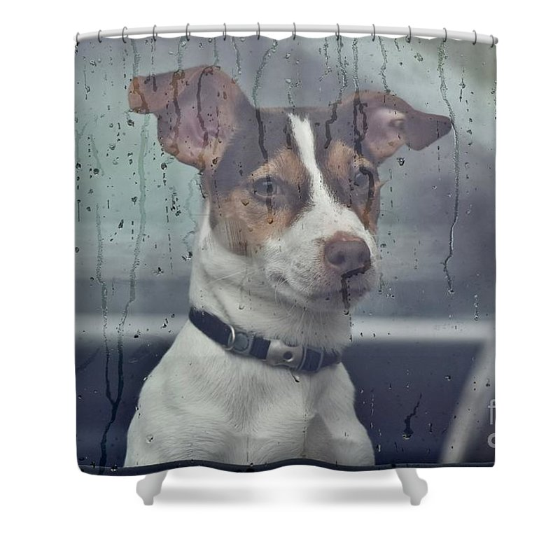 Animal Shower Curtain featuring the photograph Pet Looking Out Car Window On Rainy Day by Jeramey Lende