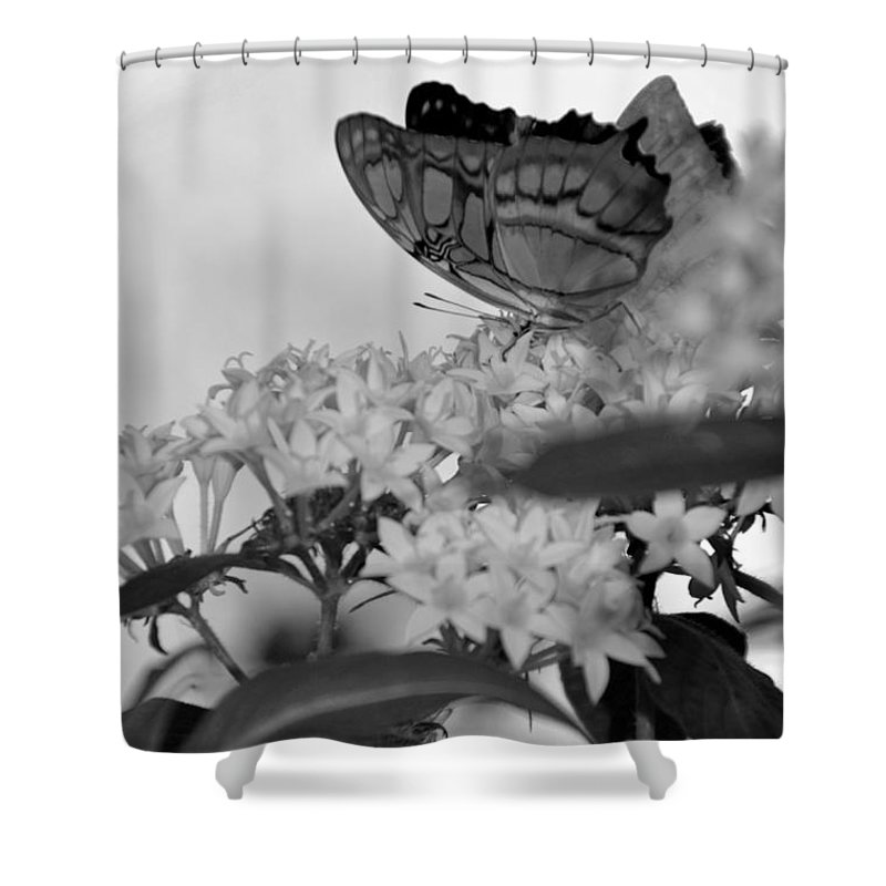 Butterfly Shower Curtain featuring the photograph Petal Perch by Mithayil Lee