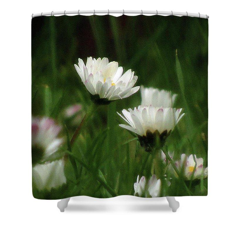 White Daisies Shower Curtain featuring the photograph Petite Daisies 3 by Kim Tran