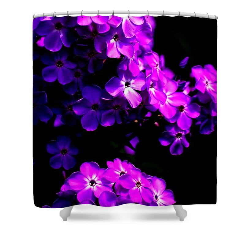 Digital Photograph Shower Curtain featuring the photograph Phlox 1 by David Lane