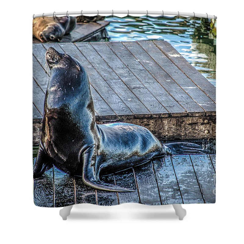Sea Lion Shower Curtain featuring the photograph Pier 39 by Yvette Wilson