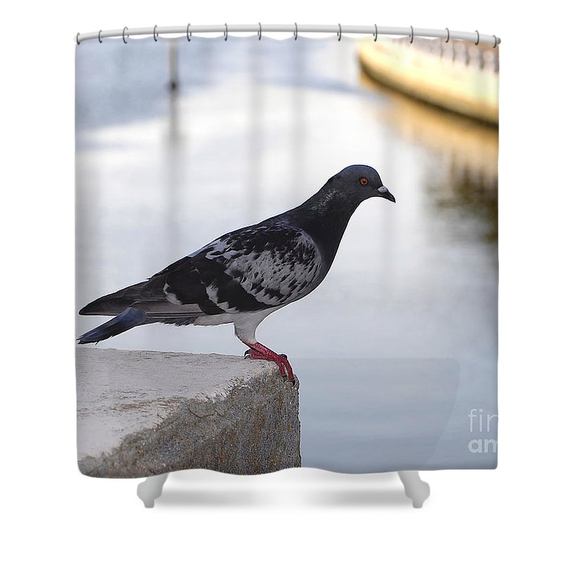 Pigeon Shower Curtain featuring the photograph Pigeon By The River by David Lee Thompson