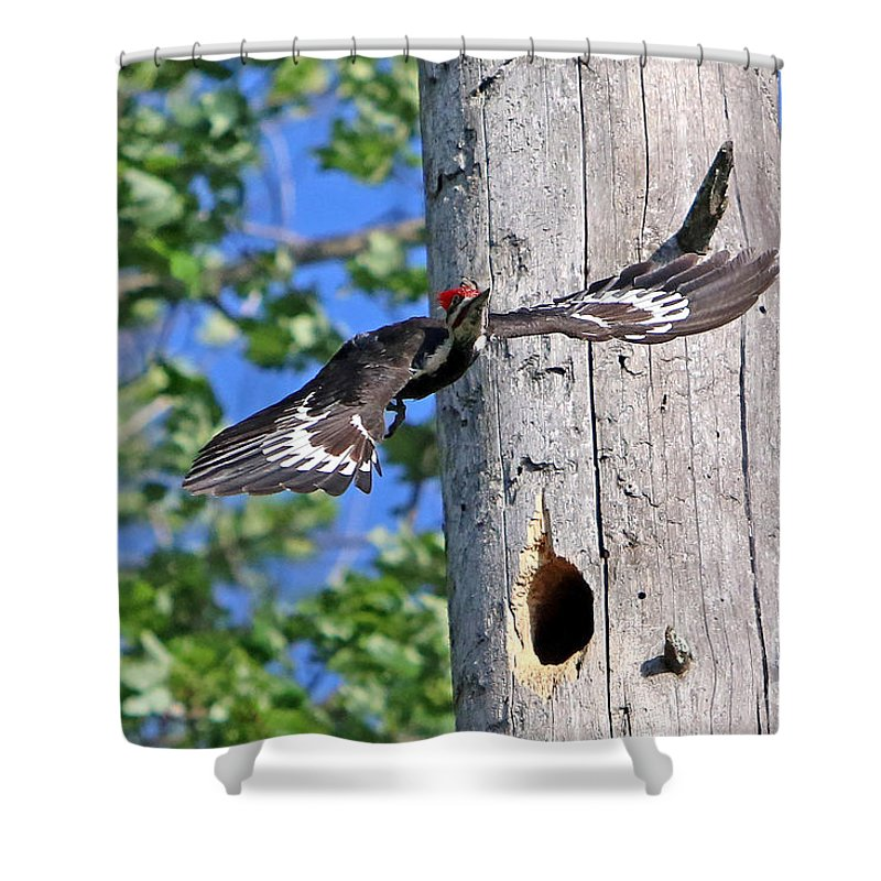 Woodpecker Shower Curtain featuring the photograph Pileated #27 by James F Towne