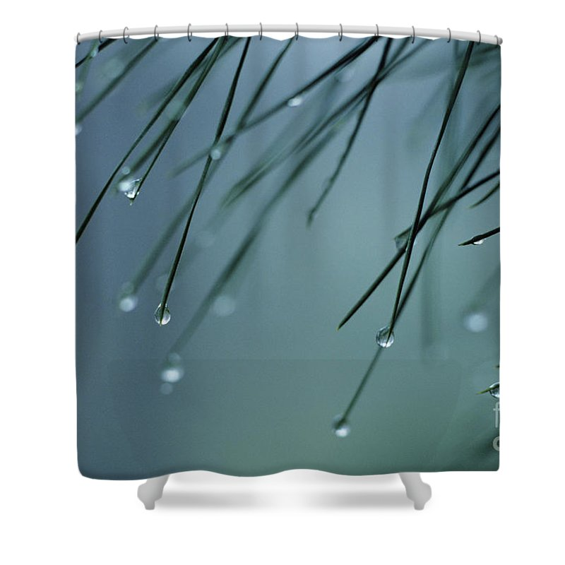 Beautiful Shower Curtain featuring the photograph Pine Needle Raindrops by Greg Vaughn - Printscapes