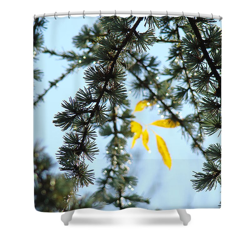 Autumn Shower Curtain featuring the photograph Pine Tree Art Prints Blue Sky Yellow Fall Leaves by Baslee Troutman