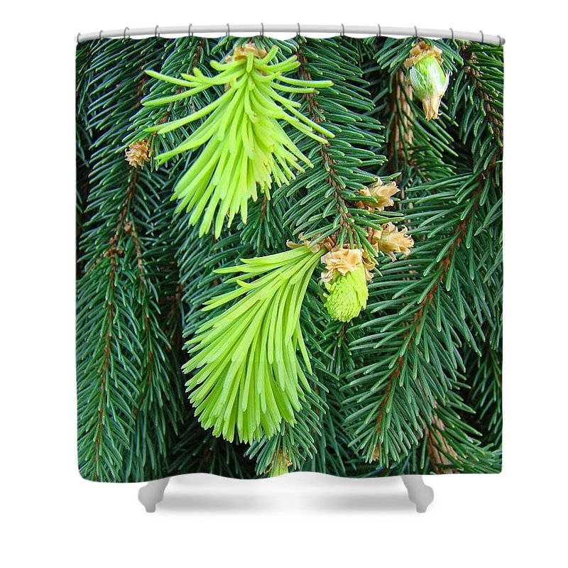 Pine Shower Curtain featuring the photograph Pine Tree Branches Art Prints Conifer Forest Baslee Troutman by Baslee Troutman