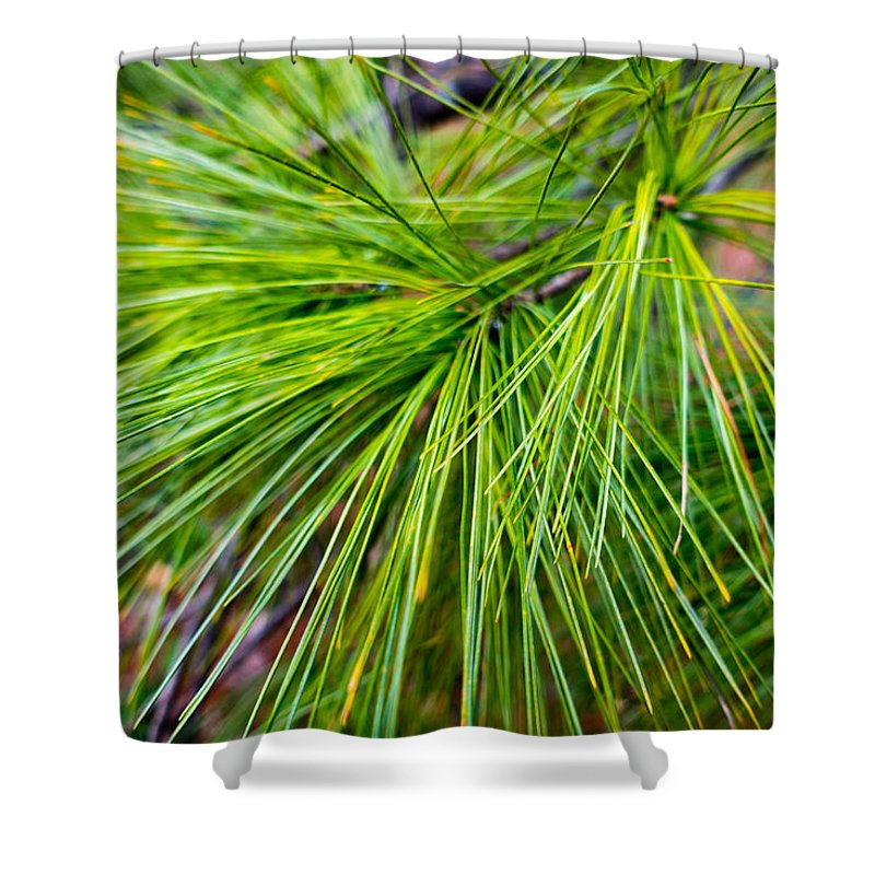 Fresh Shower Curtain featuring the photograph Pine Tree Needles by SR Green