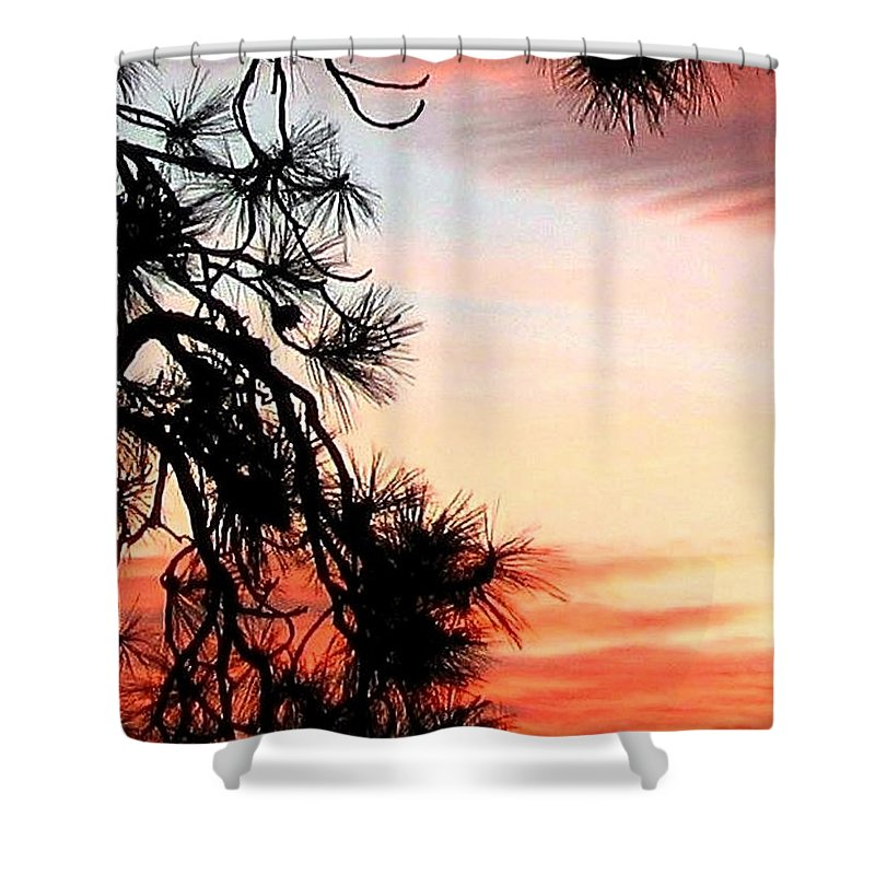 Sunset Shower Curtain featuring the photograph Pine Tree Silhouette by Will Borden