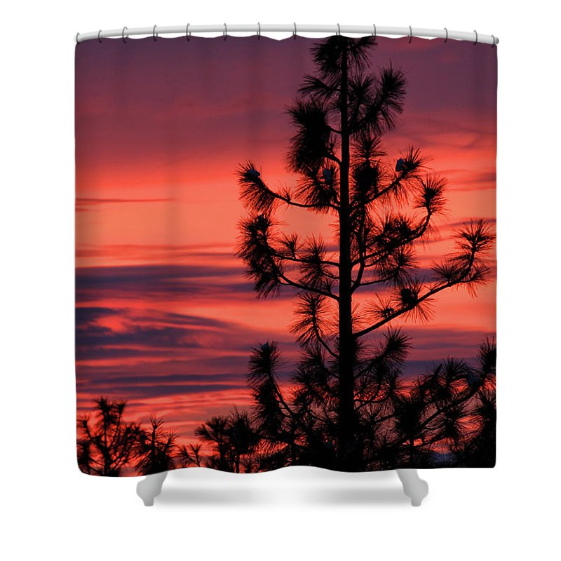 Branches Shower Curtain featuring the photograph Pine Tree Sunrise by James Eddy