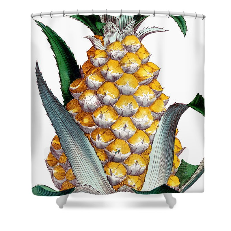 1789 Shower Curtain featuring the photograph Pineapple, 1789 by Granger