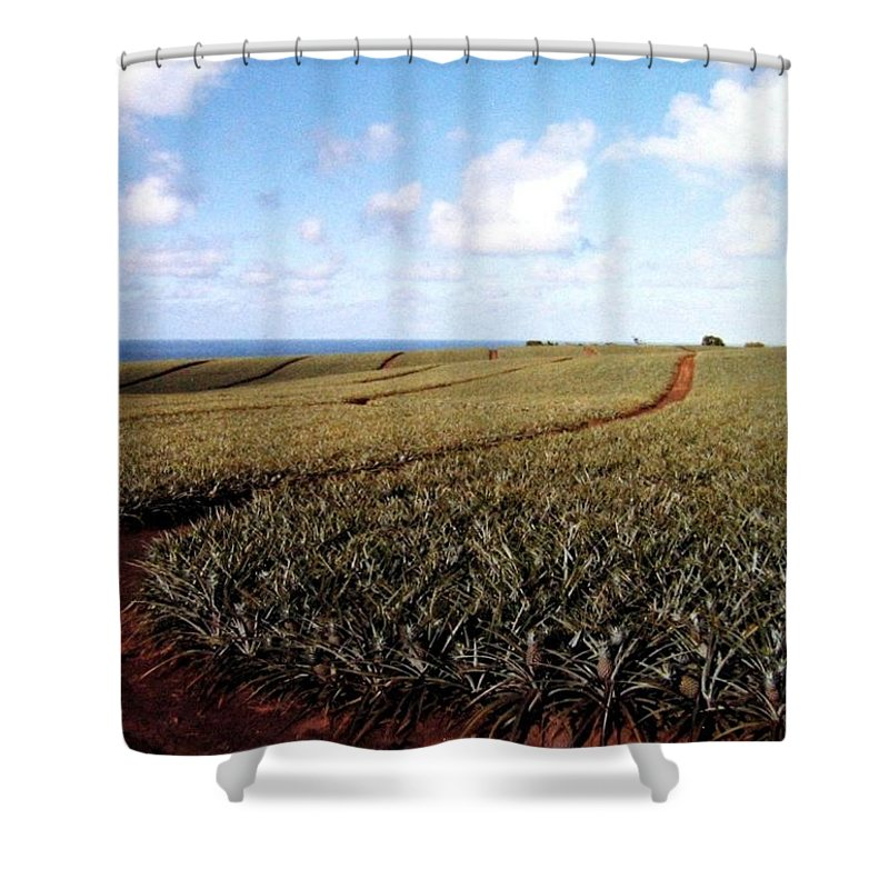 1986 Shower Curtain featuring the photograph Pineapple Fields by Will Borden