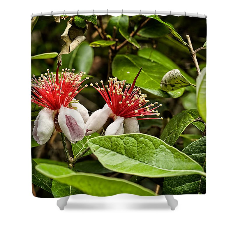 Beaufort County Shower Curtain featuring the photograph Pineapple Guava by Phill Doherty
