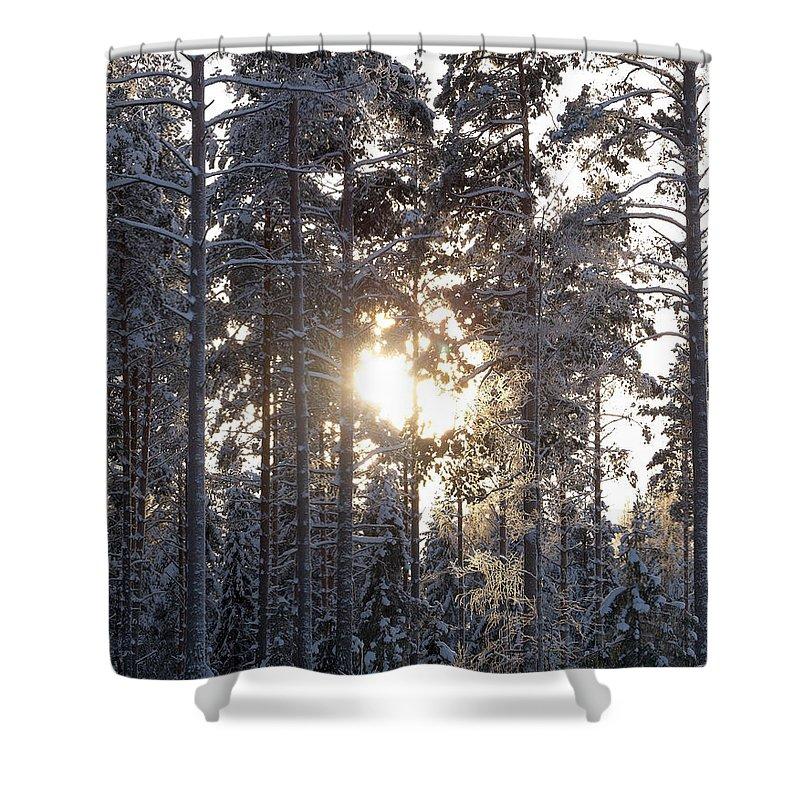 Lehtokukka Shower Curtain featuring the photograph Pines 2 by Jouko Lehto