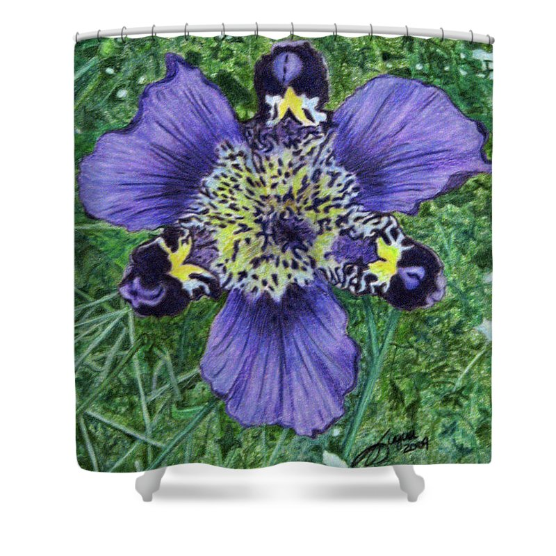 Fuqua - Artwork Shower Curtain featuring the drawing Pinewoods Lily by Beverly Fuqua