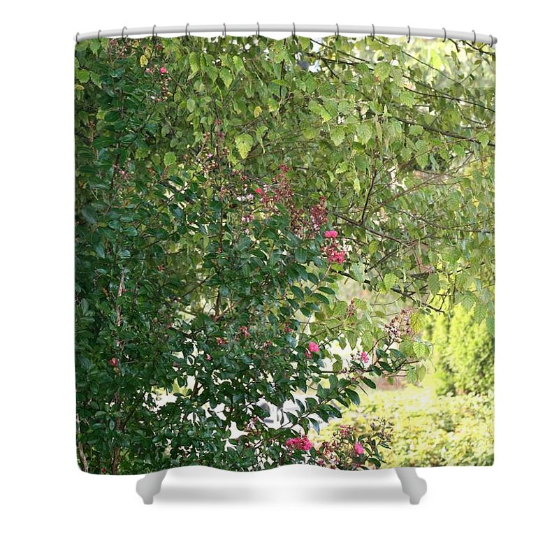 Path Shower Curtain featuring the photograph Pink And Green Path by Nadine Rippelmeyer