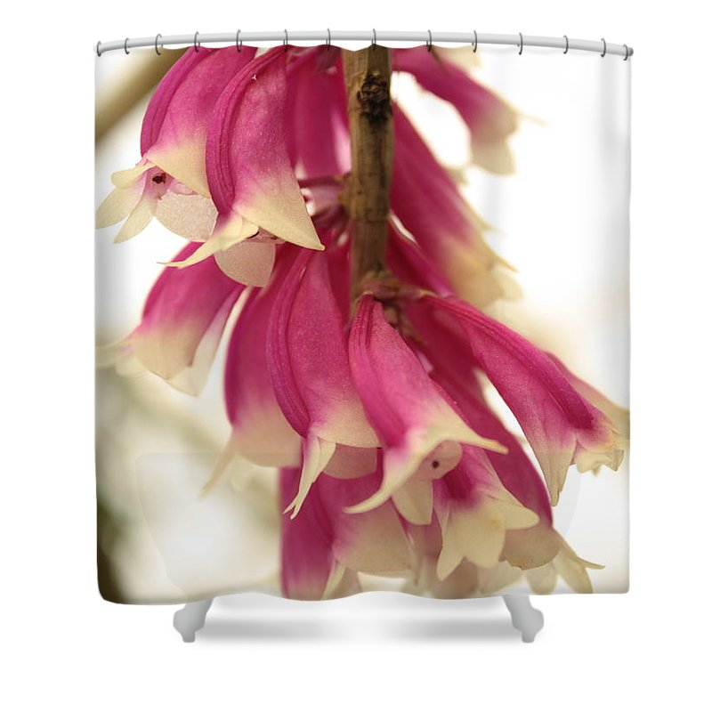 Pink And White Flowers Shower Curtain featuring the photograph Pink And White Bells by Carol Groenen