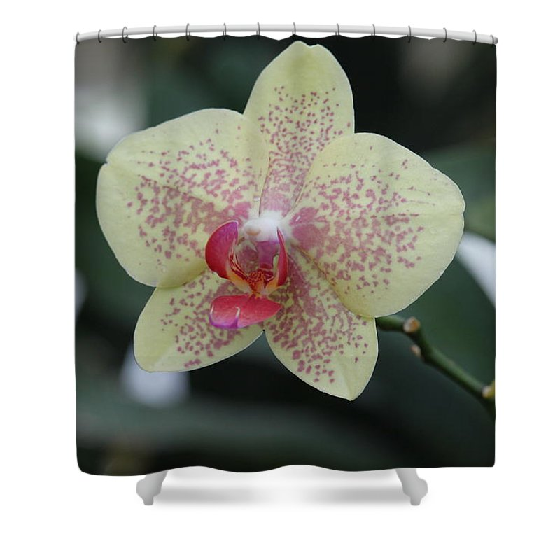 Shower Curtain featuring the photograph Orchid by Cierra Brady