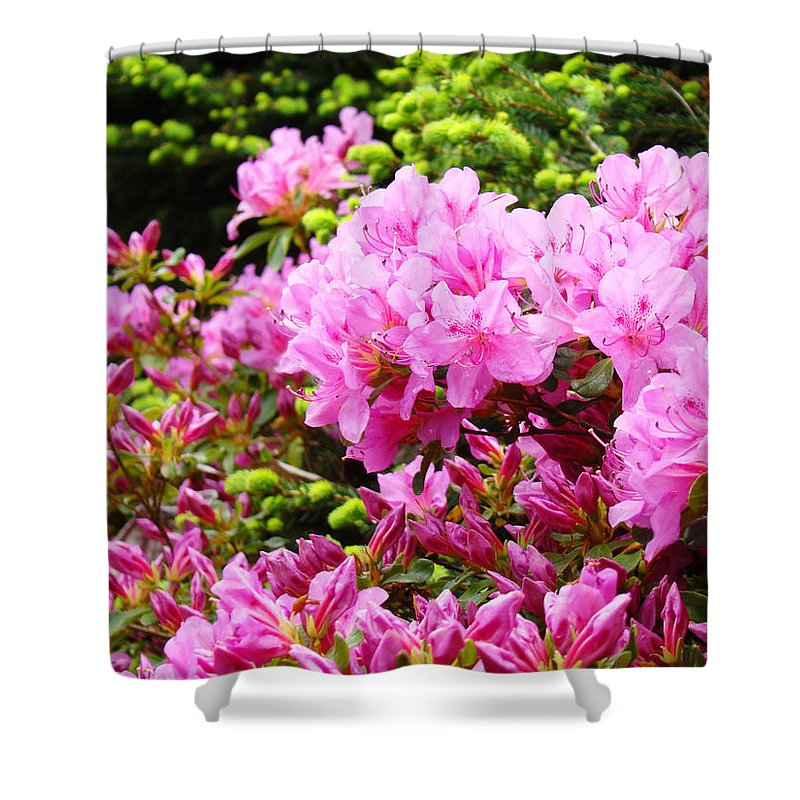 �azaleas Artwork� Shower Curtain featuring the photograph Pink Azalea Flowers Landscape 11 Art Prints Canvas Artwork Framed Art Cards by Baslee Troutman