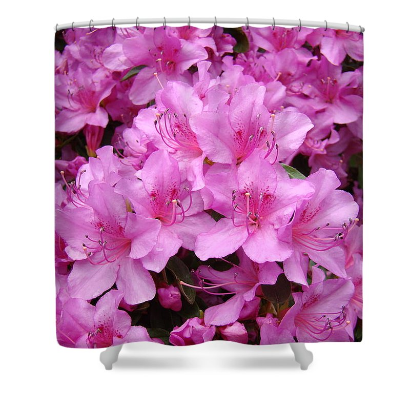 �azaleas Artwork� Shower Curtain featuring the photograph Pink Azaleas Summer Garden 6 Azalea Flowers Giclee Art Prints Baslee Troutman by Baslee Troutman